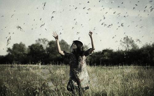 La playlist du papillon | La Brucette